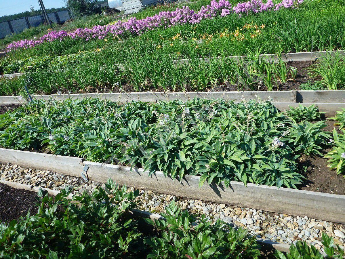 Питомники рассады и растений 110